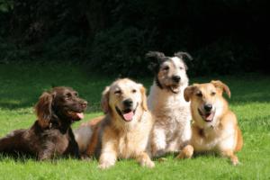 happy-dogs-328x250